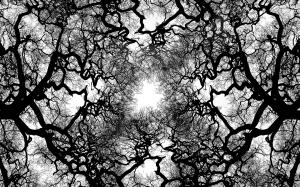 tree-veins_00388899